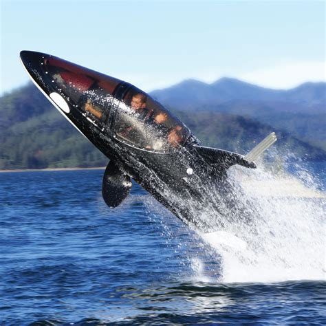 the shark names the submarine whale watching boat seabreacher y killer whale personal submarine the