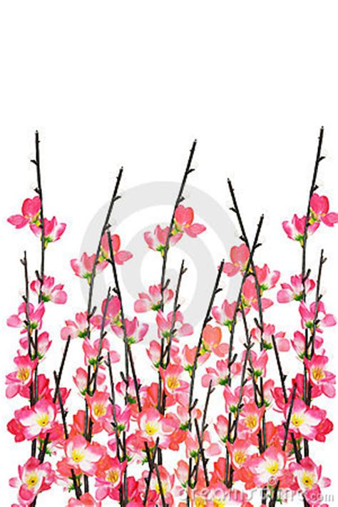 new year flower painting new year cherry blossoms background royalty free