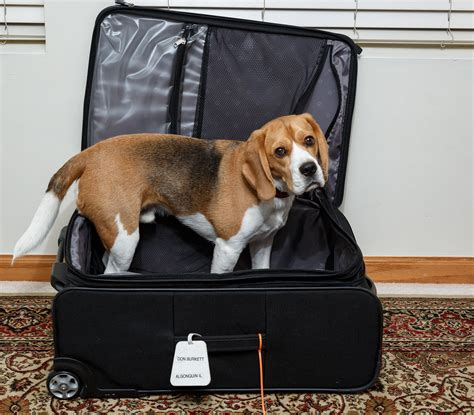 puppy suitcase keep your safe when disaster strikes rover