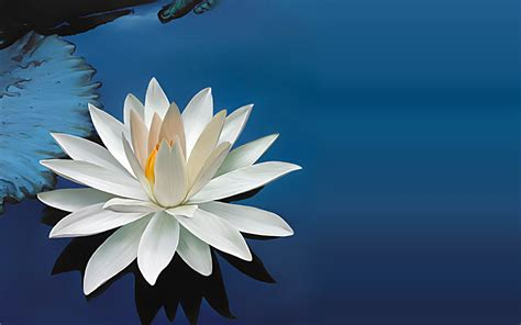 wallpaper 3d lotus lotus wallpapers best wallpapers