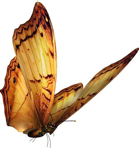imagenes mariposas doradas marcos para fotos marcosscrap mariposas png