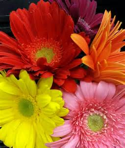 Wholesale Vases For Florists Gerbera Daisy Sunglow Flowers