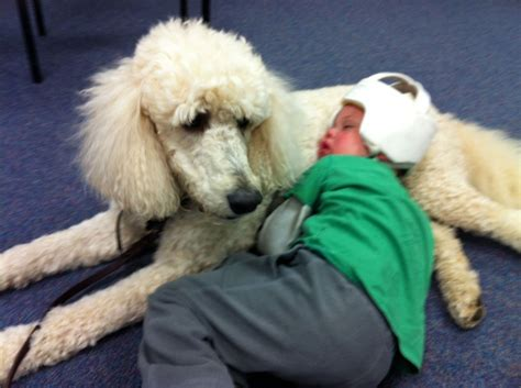 for therapy dogs therapy visits fidos for freedom