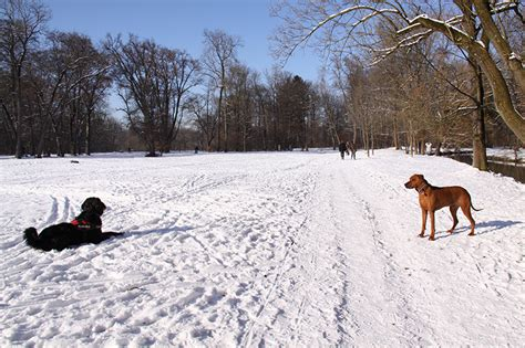 Englischer Garten Hunde Leinenpflicht by Hundewiesen In Und Um M 252 Nchen K 246 Rbchen 174