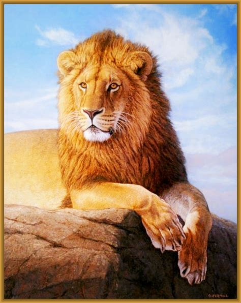 imagenes de animales salvajes de africa related keywords suggestions for leones salvajes