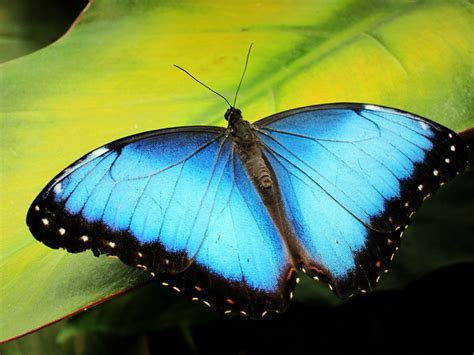 kingdom the insect of costa rica zona tropical publications books butterflies in costa rica lands in
