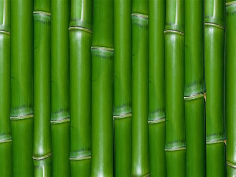 imagenes wallpaper bamboo wallpapers bamboo wall wallpapers
