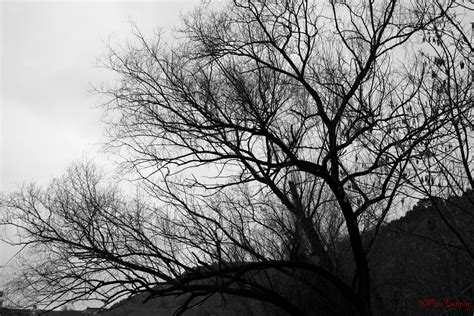 black white tree by maxleppig on deviantart