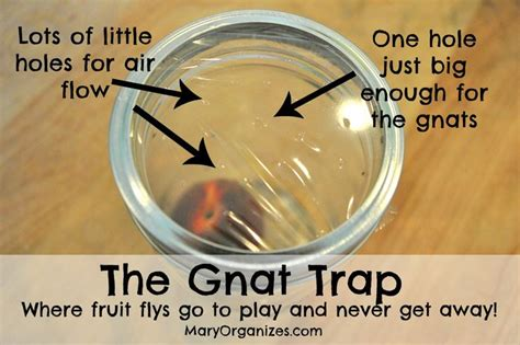 get rid of fruit flies for gnat traps how to get