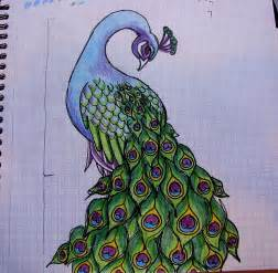 115 best birds images on pinterest peacock drawing