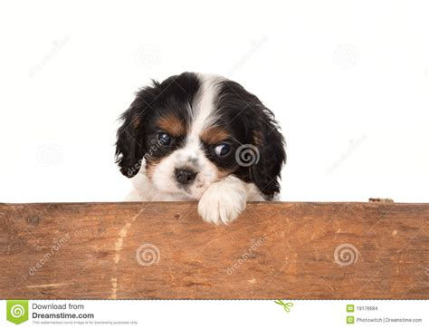 puppy waiting waiting puppy stock images image 19176684