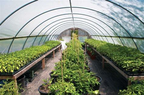 Amending Soil For Vegetable Garden 17 Best Images About Do It Yourself On Gardens