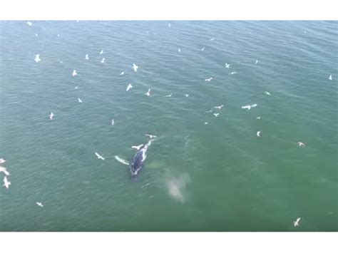 jersey shore nj spark watch humpback whale swims near jersey shore beaches