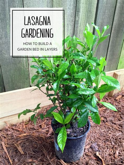 lasagna gardening in containers lasagna gardening how to layer a raised garden bed