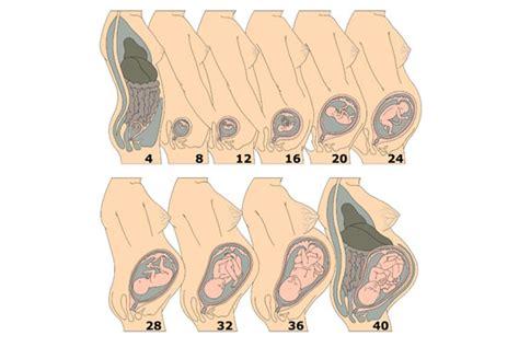 ab wann bekommt einen bauch in der schwangerschaft ssw 23 220 ben wie ein weltmeister 187 fratz co