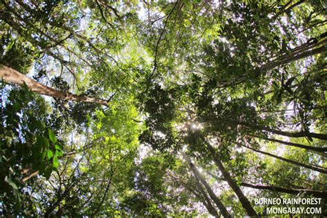 What Does Canopy In The Rainforest Rainforest Canopy Structure