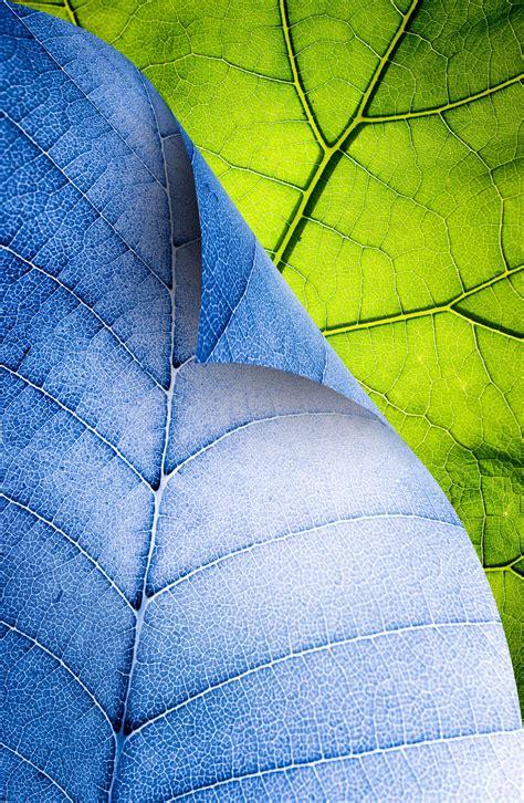 Kemeja Green Blue Leaf blue green leaf photo texture leaves