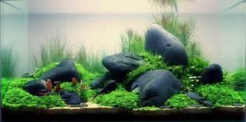 aquarium aquascape design ideas decosee