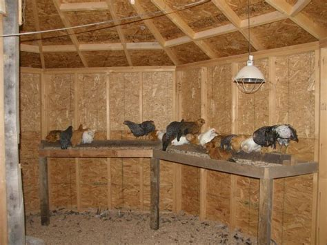 poop houses 79 best images about chicken droppings boards on pinterest