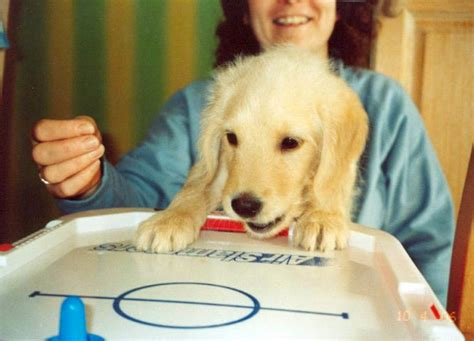 interactive toys for dogs interactive toys for bored dogs start with one of