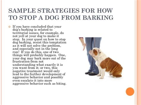 how to make stop barking how to stop a from barking