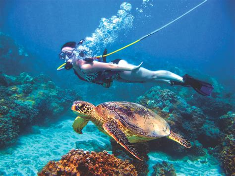 dive roatan roatan snuba diving excursion discover roatan excursions