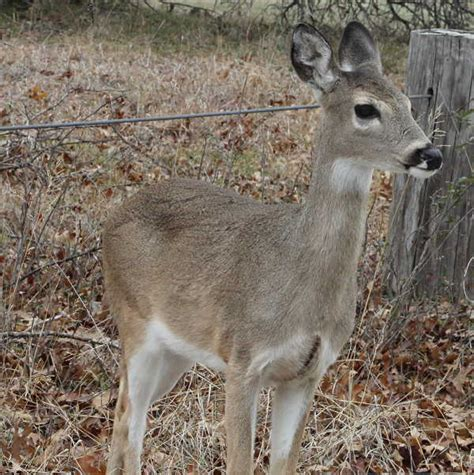 do deer see color whitetail deer change colors with the seasons gjm nature