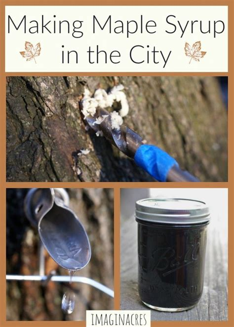 44 best images about maple syrup and other tree syrups on