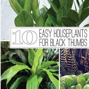 easiest indoor plants the rainforest garden 10 of the easiest houseplants for