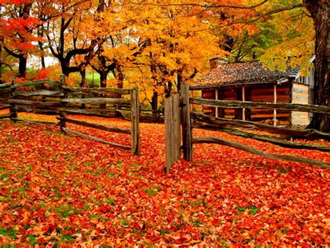 Fall Farmhouse Wallpaper A Farm In Autumn Forests Nature Background Wallpapers