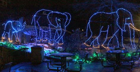 louis zoo lights from santa visits to zoo lights family events to ring in