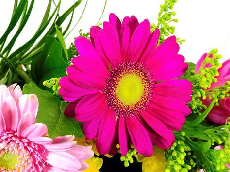 gambar wallpaper bunga segar gambar wallpaper bunga segar gudang wallpaper