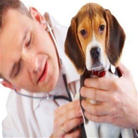 decongestant for dogs can i give my decongestants can i give my