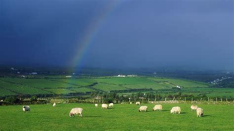 download sheep ireland wallpaper 1920x1080 wallpoper 413062