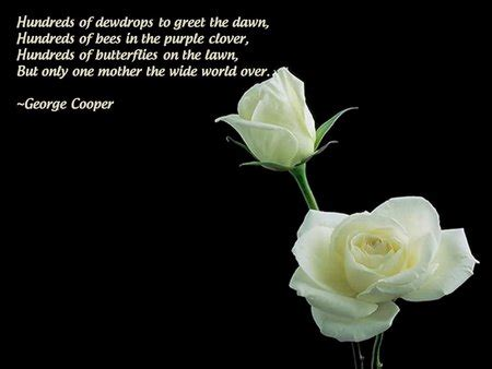 White rose flower quotes mightylinksfo