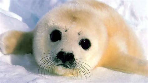 cutest on earth top 10 cutest animals on earth www pixshark images