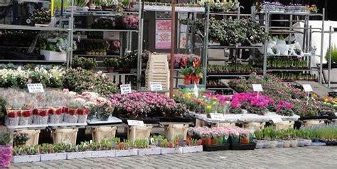 Garden Center Upminster Romford Market Plant Perfections