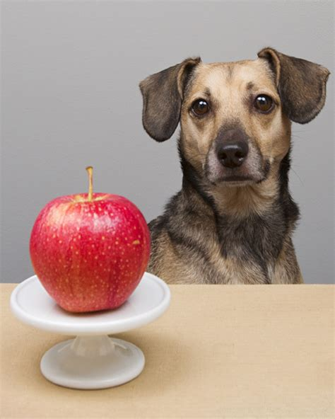 apples for puppies nutrition 5 healthy friendly human foods pawsh magazine