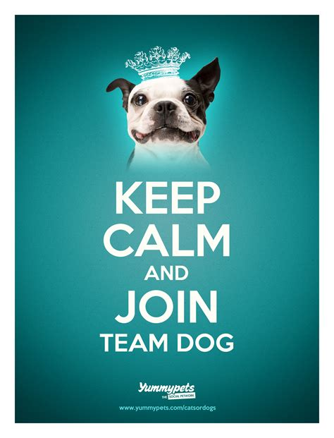 keep calm and puppies great britain time to decide are we a nation of cat or