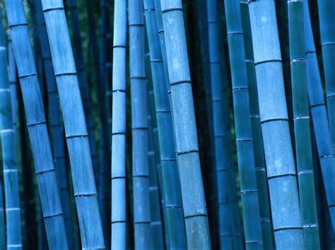 imagenes wallpaper bamboo bamboo wallpaper bamboo textured wallpaper