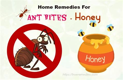 37 home remedies for ant bites and stings swelling itching