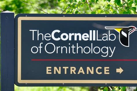 cornell lab of ornithology ithaca ny top tips before