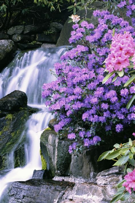 beautiful waterfalls with flowers 1 thessalonians 5 16 18 rejoice evermore pray without