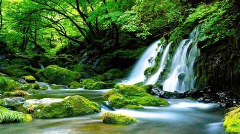7 Beautiful Tree Themes by Waterfalls Rocks Green Fores Nature Stones Pretty Trees