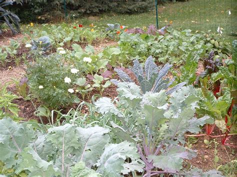plant a fall garden and grow veggies far beyond summer veggie gardening tips