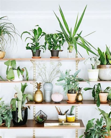 Interior With Plants The Ultimate Plant Shelfie Blomster Pinterest