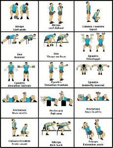 musculation avec halt 232 res exercices et programme biceps