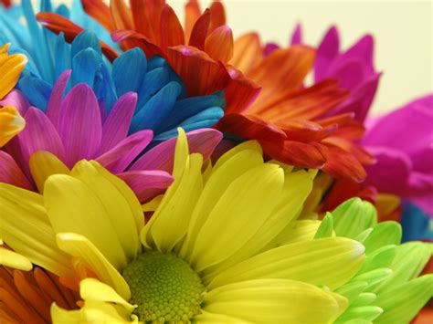 bright colored flowers bright color blooms flower