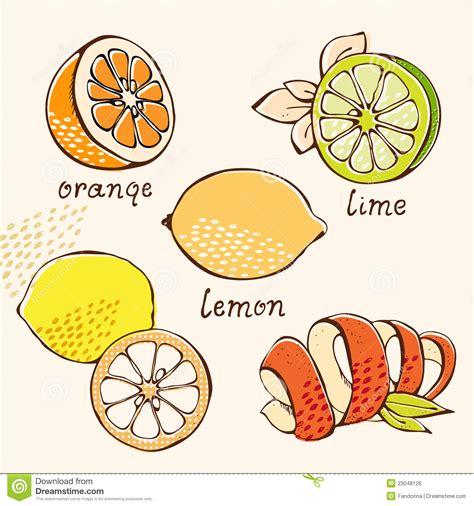 When You Lemons Doodles - citrus doodle set royalty free stock image image 23048126