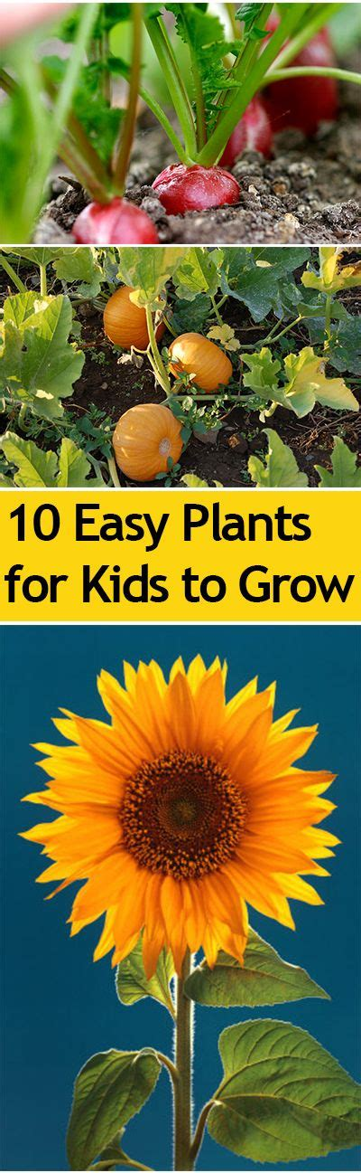 10 easy plants for kids to grow great ideas for kids to learn how to plant and cultivate their